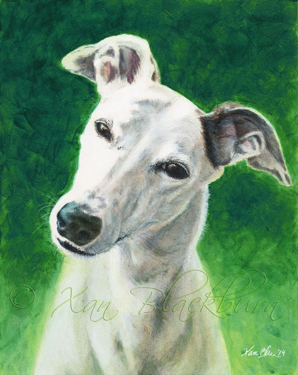 Katie, pet portrait by Xan Blackburn, acrylic on Aquabord, greyhound portrait, greyhound