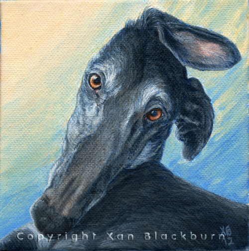 """Iker"" by Xan Blackburn. Acrylic on canvas.  Pet portrait, hound, dog, dog portrait"