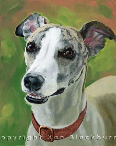 """""""Wali"""" by Xan Blackburn. Acrylic on canvas.  Pet portrait, hound, dog, dog portrait"""