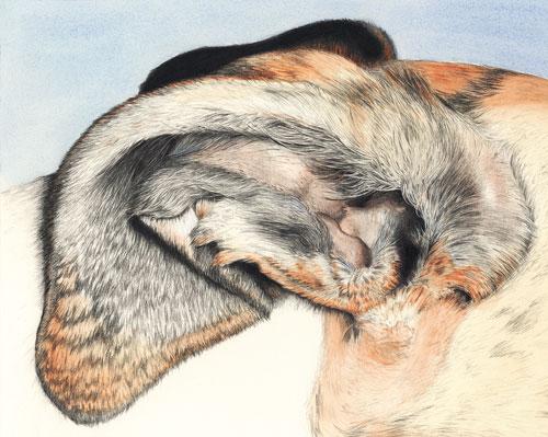 """Wabi's Ear/Rosebud Ear"" by Xan Blackburn. mixed media"