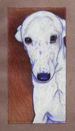 Cole, by Xan Blackburn, pastel on paper