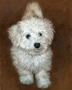 Fluffy, by Xan Blackburn, acrylic on gessoed panel