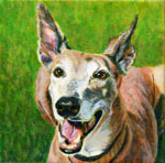 Lottie, by Xan Blackburn, acrylic on canvas