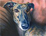Petey, by Xan Blackburn acrylic 8x10, greyhound, brindle, pet portrait