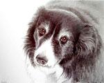 Sadie, by Xan Blackburn, graphite and gouache on paper