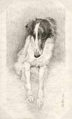 Silky, by Xan Blackburn, graphite on vellum paper